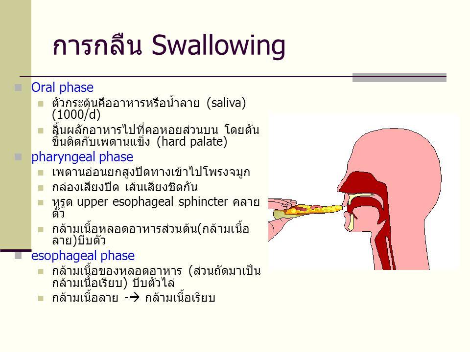 การกลืน Swallowing  Oral phase  ตัวกระตุ้นคืออาหารหรือน้ำลาย (saliva) (1000/d)  ลิ้นผลักอาหารไปที่คอหอยส่วนบน โดยดัน ขึ้นติดกับเพดานแข็ง (hard palate)  pharyngeal phase  เพดานอ่อนยกสูงปิดทางเข้าไปโพรงจมูก  กล่องเสียงปิด เส้นเสียงชิดกัน  หูรูด upper esophageal sphincter คลาย ตัว  กล้ามเนื้อหลอดอาหารส่วนต้น(กล้ามเนื้อ ลาย)บีบตัว  esophageal phase  กล้ามเนื้อของหลอดอาหาร (ส่วนถัดมาเป็น กล้ามเนื้อเรียบ) บีบตัวไล่  กล้ามเนื้อลาย -  กล้ามเนื้อเรียบ