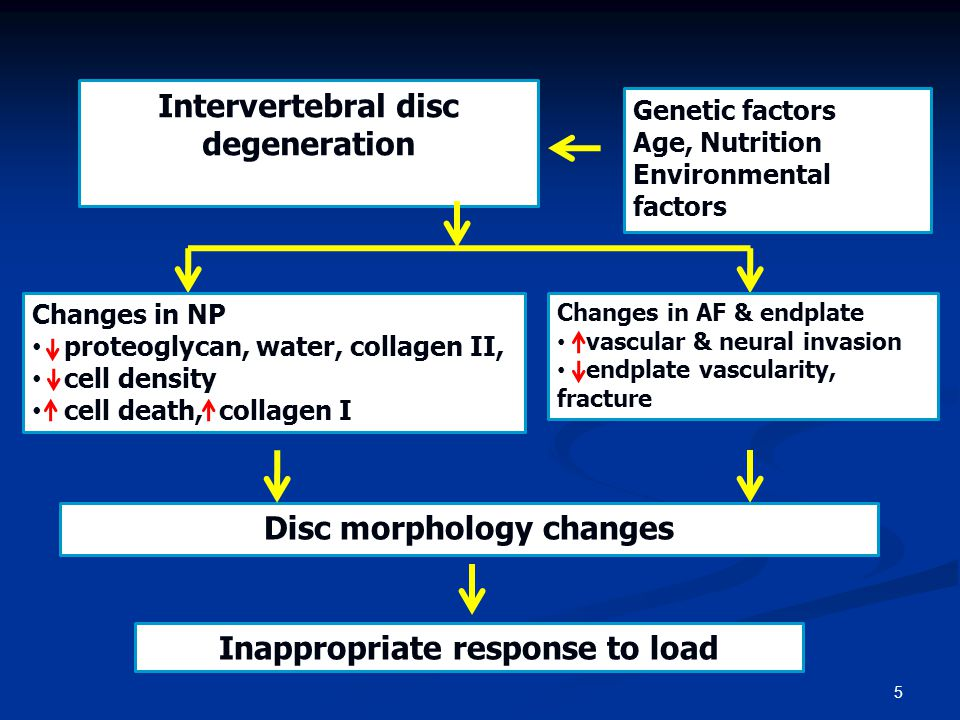 5 Changes in NP • proteoglycan, water, collagen II, • cell density • cell death, collagen I Disc morphology changes Inappropriate response to load Int