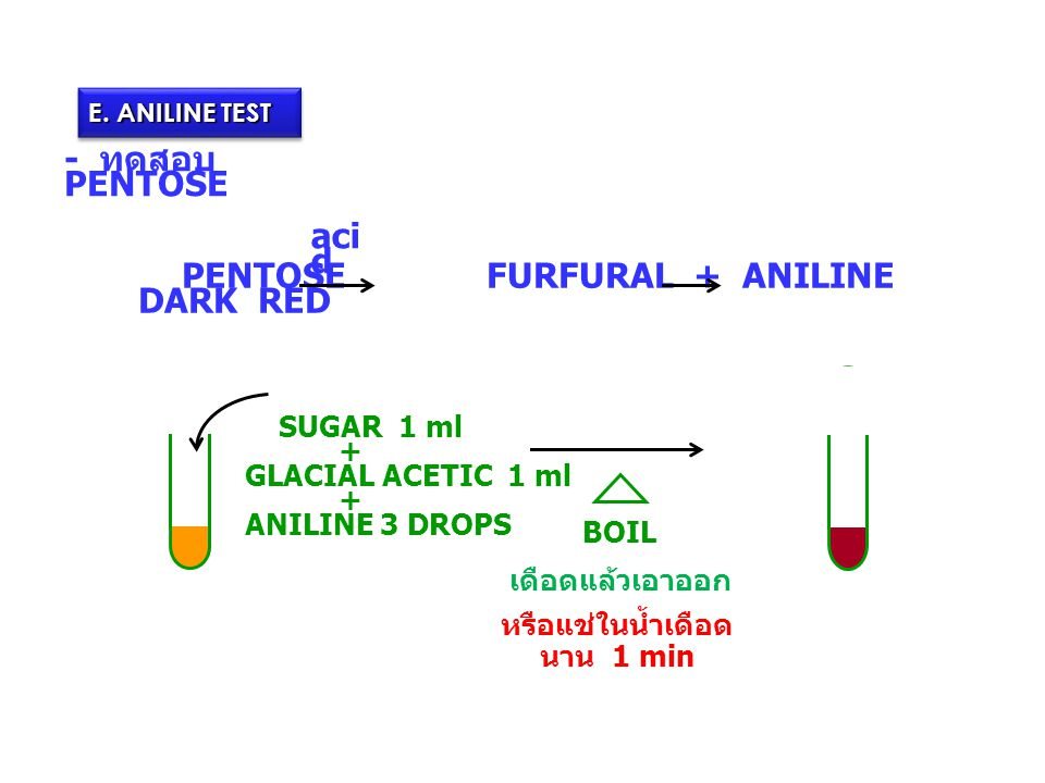 E. ANILINE TEST - ทดสอบ PENTOSE PENTOSE FURFURAL + ANILINE DARK RED aci d BOIL SUGAR 1 ml + GLACIAL ACETIC 1 ml + ANILINE 3 DROPS เดือดแล้วเอาออก หรือ