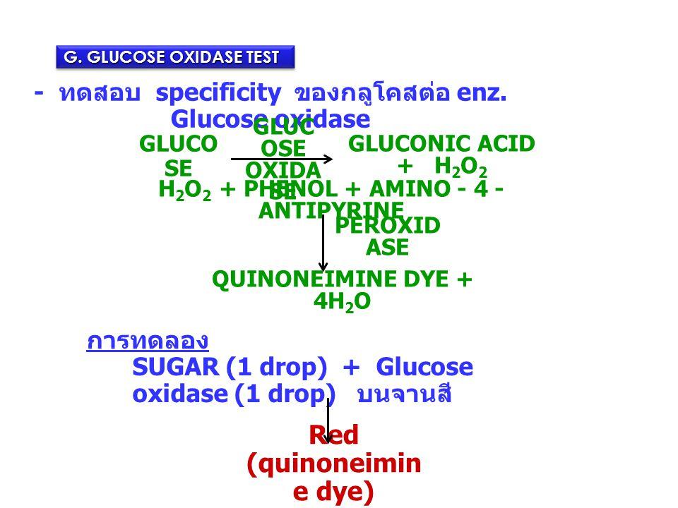 G. GLUCOSE OXIDASE TEST - ทดสอบ specificity ของกลูโคสต่อ enz. Glucose oxidase SUGAR (1 drop) + Glucose oxidase (1 drop) บนจานสี Red (quinoneimin e dye
