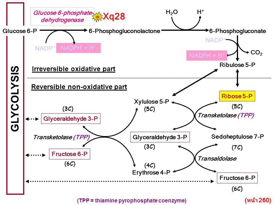 GLYCOLYSIS Glucose 6-P Glucose 6-phosphate dehydrogenase Sedoheptulose 7-P (7C) Fructose 6-P (6C) Glyceraldehyde 3-P (3C) Erythrose 4-P (4C) Fructose