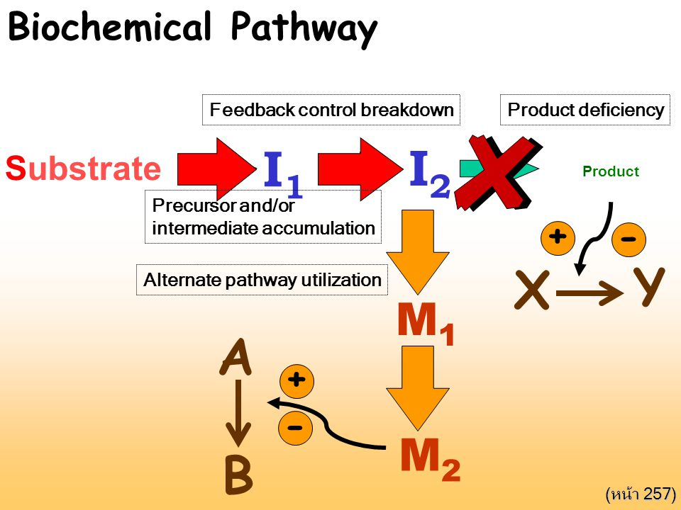 Feedback inhibition Substrate I1I1 I2I2 Product M1M1 M2M2 A B + - X Y + - Biochemical Pathway Product deficiencyFeedback control breakdown Precursor a