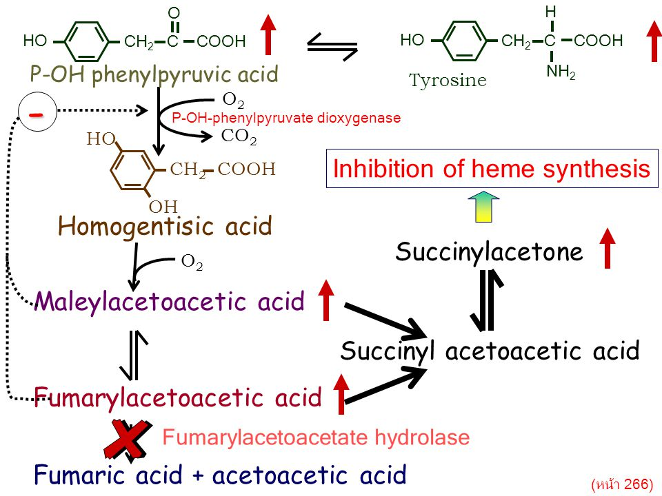 CH 2 C COOH H NH 2 HO Tyrosine CH 2 COOH HO OH Homogentisic acid O2O2 CO 2 Maleylacetoacetic acid Fumarylacetoacetic acid Fumaric acid + acetoacetic acid Fumarylacetoacetate hydrolase O2O2 Succinylacetone Succinyl acetoacetic acid - Inhibition of heme synthesis P-OH phenylpyruvic acid CH 2 C COOH O HO P-OH-phenylpyruvate dioxygenase (หน้า 266)