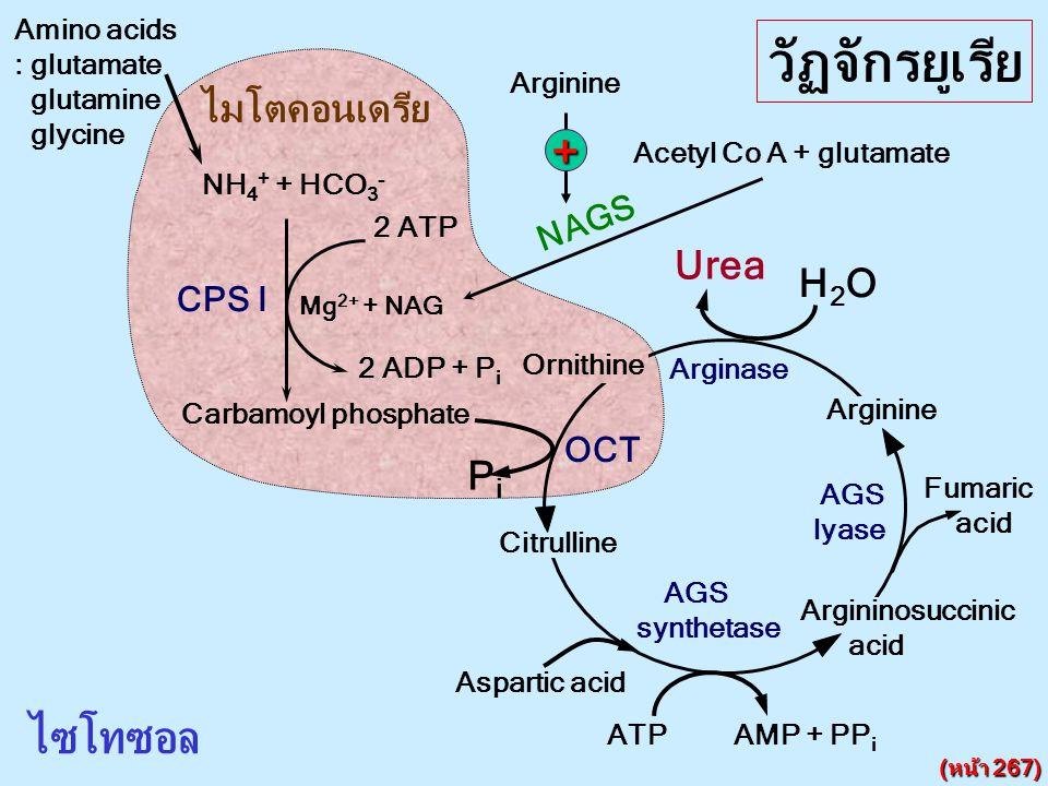 NH 4 + + HCO 3 - CPS I 2 ATP 2 ADP + P i Mg 2+ + NAG NAGS Acetyl Co A + glutamate ไมโตคอนเดรีย ไซโทซอล Citrulline Argininosuccinic acid Arginine Ornit