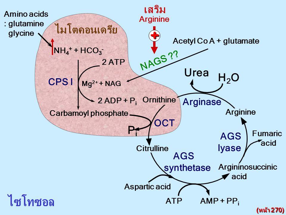 NH 4 + + HCO 3 - CPS I 2 ATP 2 ADP + P i Mg 2+ + NAG NAGS ?? Acetyl Co A + glutamate ไมโตคอนเดรีย ไซโทซอล Citrulline Argininosuccinic acid Ornithine U