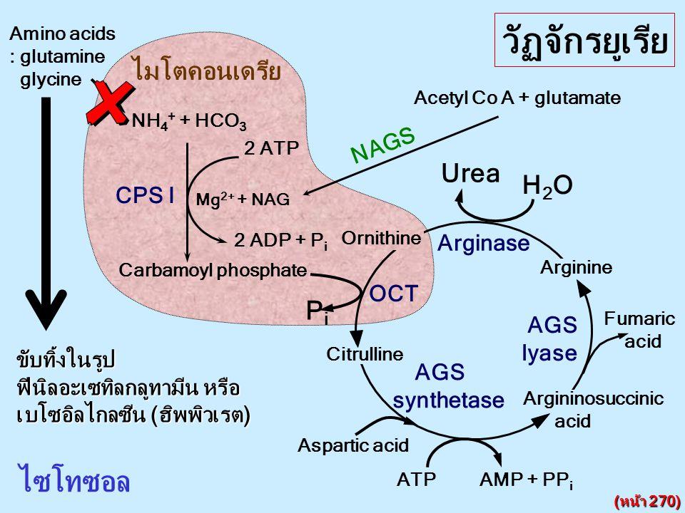 NH 4 + + HCO 3 CPS I 2 ATP 2 ADP + P i Mg 2+ + NAG NAGS Acetyl Co A + glutamate ไมโตคอนเดรีย ไซโทซอล Citrulline Argininosuccinic acid Arginine Ornithi