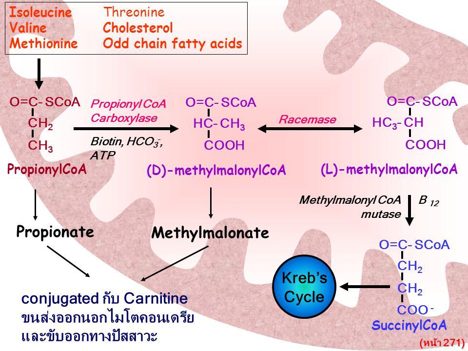 O=C- SCoA CH 2 CH 3 PropionylCoA O=C- SCoA HC- CH 3 COOH (D)-methylmalonylCoA O=C- SCoA HC 3 - CH COOH (L)-methylmalonylCoA SuccinylCoA O=C- SCoA CH 2
