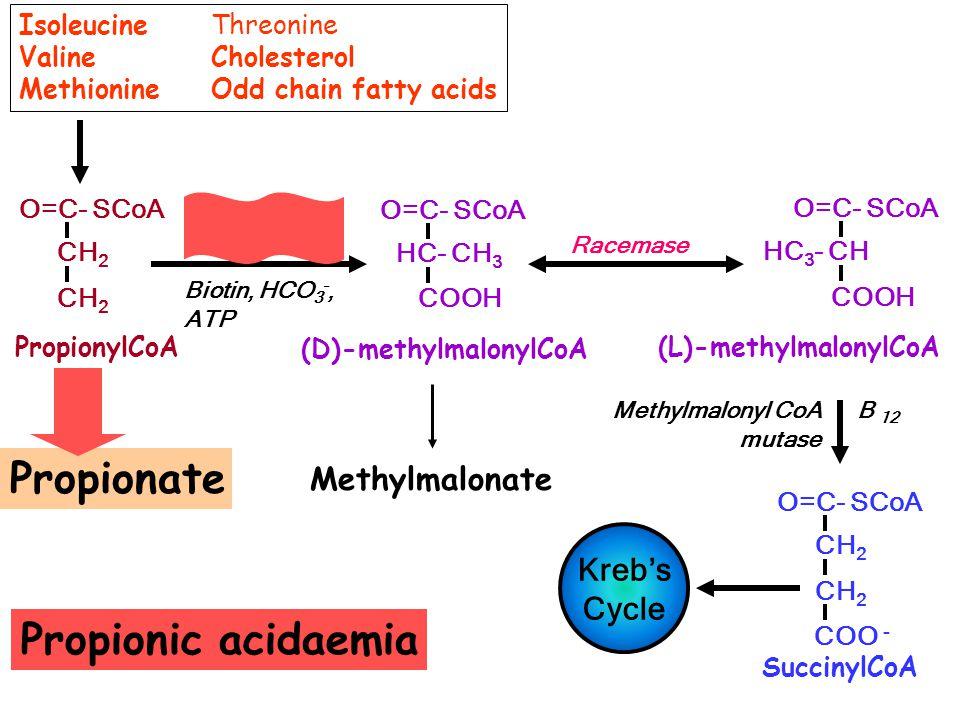O=C- SCoA CH 2 PropionylCoA SuccinylCoA O=C- SCoA CH 2 COO - Kreb's Cycle Methylmalonyl CoA B 12 mutase Propionyl CoA Carboxylase Biotin, HCO 3 -, ATP