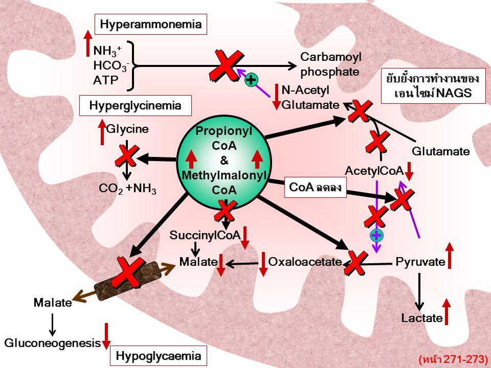 Carbamoyl phosphate NH 3 + HCO 3 - ATP Glutamate AcetylCoA N-Acetyl Glutamate + Malate Oxaloacetate Pyruvate Malate + Glycine CO 2 +NH 3 Lactate Gluco