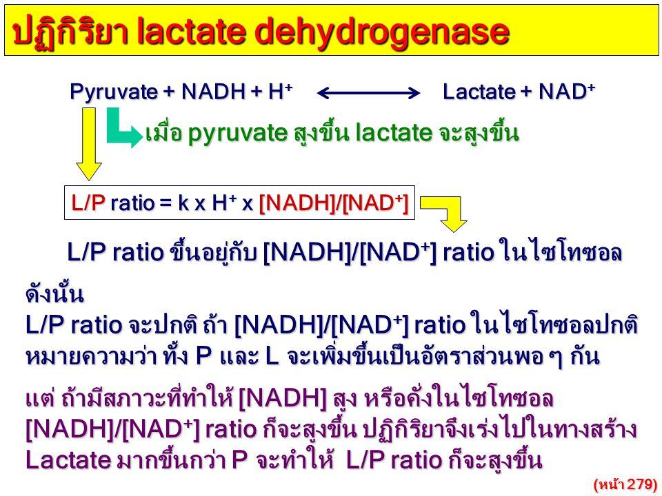 Pyruvate + NADH + H + Lactate + NAD + ปฏิกิริยา lactate dehydrogenase L/P ratio = k x H + x [NADH]/[NAD + ] เมื่อ pyruvate สูงขึ้น lactate จะสูงขึ้น L