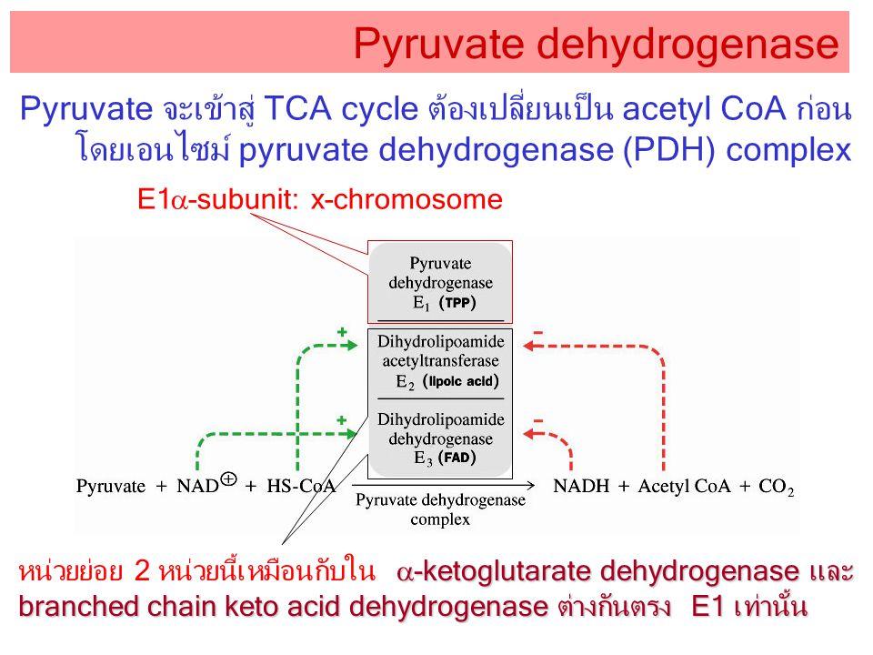 Pyruvate จะเข้าสู่ TCA cycle ต้องเปลี่ยนเป็น acetyl CoA ก่อน โดยเอนไซม์ pyruvate dehydrogenase (PDH) complex Pyruvate dehydrogenase E1  -subunit: x-c