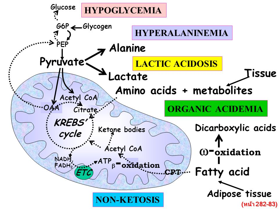 Energy depletion OAA Acetyl CoA Pyruvate PEP G6P Glycogen Glucose Citrate ETC NADH, FADH 2 ATP KREBS ' cycle HYPOGLYCEMIA Alanine HYPERALANINEMIA Lactate LACTIC ACIDOSIS Amino acids + metabolites Tissue Fatty acid CPT Ketone bodies Acetyl CoA  - oxidation Adipose tissue NON-KETOSIS  - oxidation Dicarboxylic acids ORGANIC ACIDEMIA (หน้า 282-83)