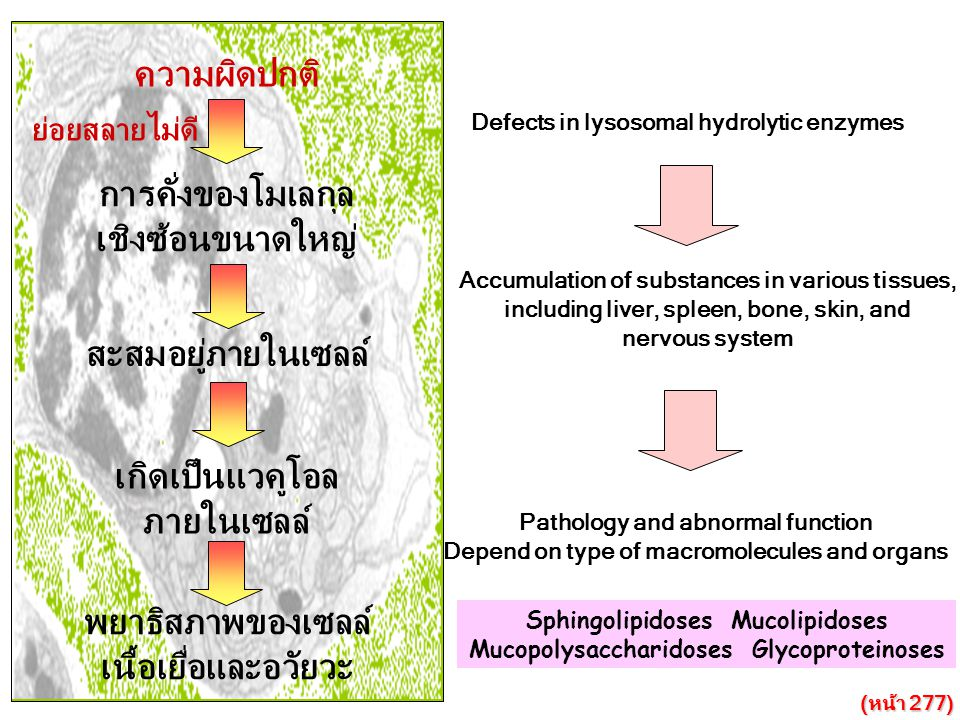 ความผิดปกติ การคั่งของโมเลกุล เชิงซ้อนขนาดใหญ่ สะสมอยู่ภายในเซลล์ เกิดเป็นแวคูโอล ภายในเซลล์ พยาธิสภาพของเซลล์ เนื้อเยื่อและอวัยวะ ย่อยสลายไม่ดี Defec