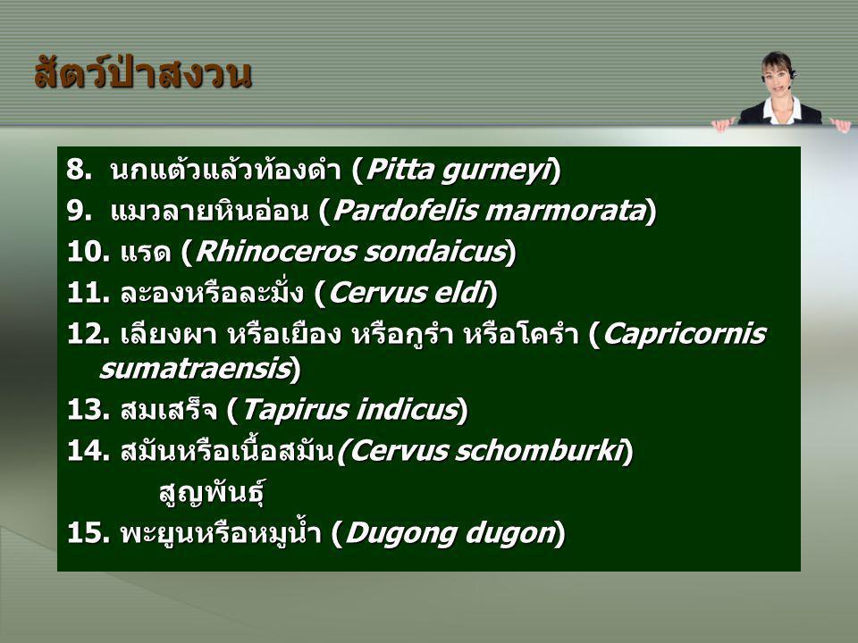 สัตว์ป่าสงวน 8. นกแต้วแล้วท้องดำ (Pitta gurneyi) 9. แมวลายหินอ่อน (Pardofelis marmorata) 9. แมวลายหินอ่อน (Pardofelis marmorata) 10. แรด (Rhinoceros s