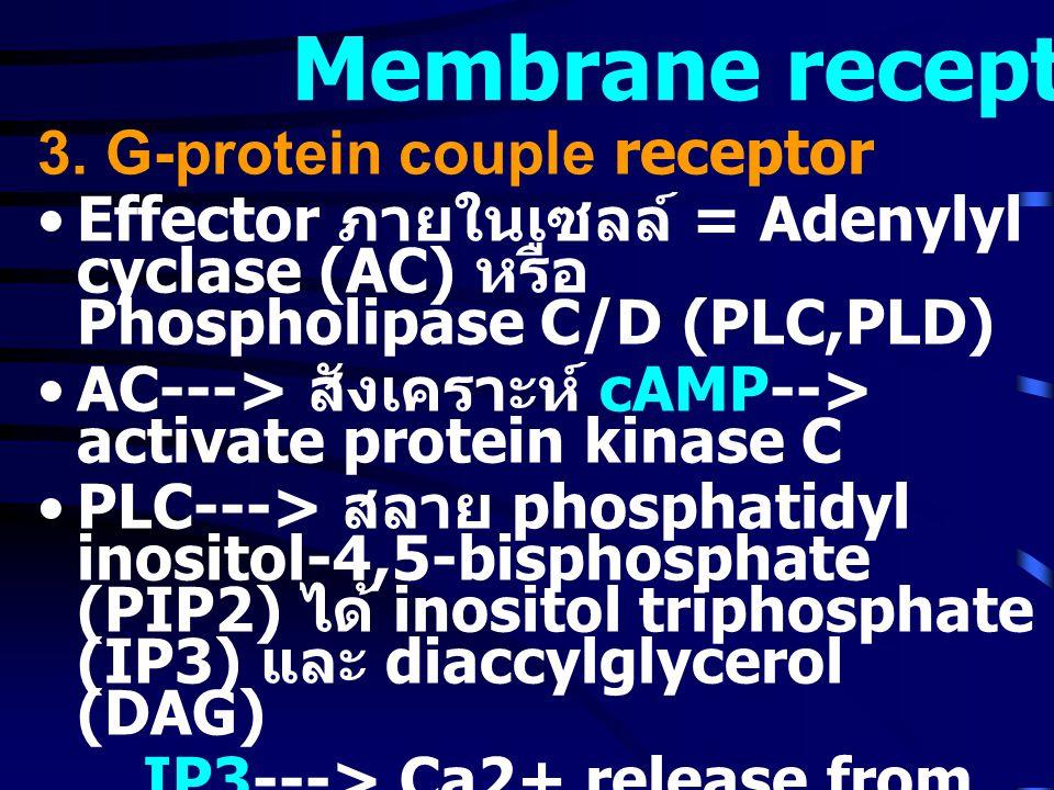 Membrane receptor 3.