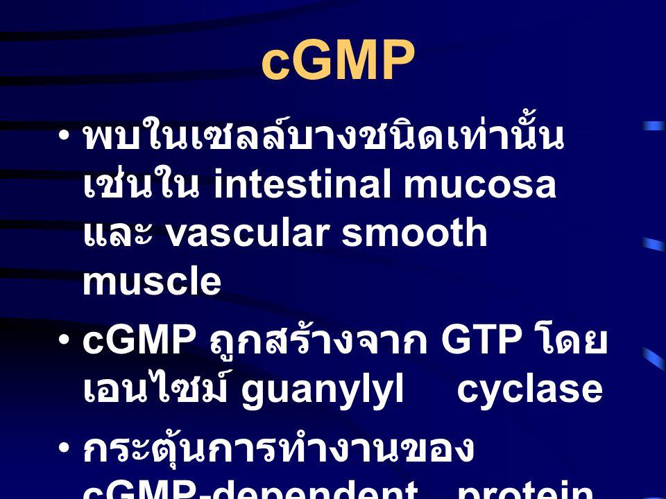 cGMP • พบในเซลล์บางชนิดเท่านั้น เช่นใน intestinal mucosa และ vascular smooth muscle •cGMP ถูกสร้างจาก GTP โดย เอนไซม์ guanylyl cyclase • กระตุ้นการทำงานของ cGMP-dependent protein kinase