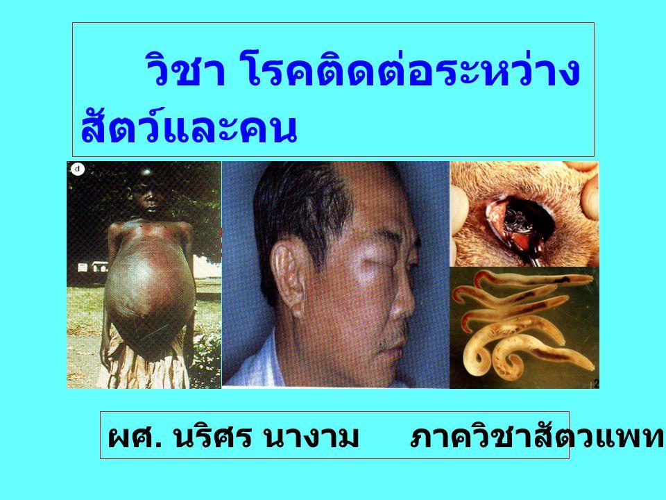 C. hepatica Liver capillariasis