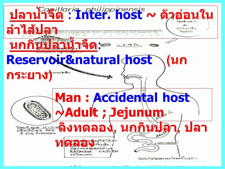 Man : Accidental host ~Adult ; Jejunum ลิงทดลอง, นกกินปลา, ปลา ทดลอง ปลาน้ำจืด : Inter. host ~ ตัวอ่อนใน ลำไส้ปลา นกกินปลาน้ำจืด : Reservoir&natural h