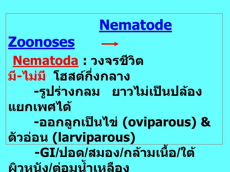 Nematode Zoonoses Nematoda : วงจรชีวิต มี - ไม่มี โฮสต์กึ่งกลาง - รูปร่างกลม ยาวไม่เป็นปล้อง แยกเพศได้ - ออกลูกเป็นไข่ (oviparous) & ตัวอ่อน (larvipar