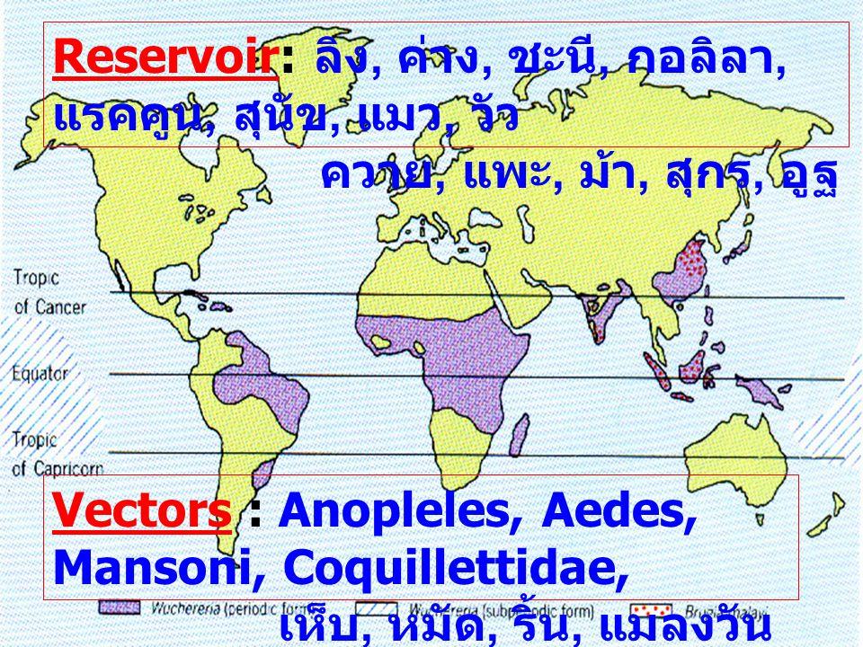 Reservoir: ลิง, ค่าง, ชะนี, กอลิลา, แรคคูน, สุนัข, แมว, วัว ควาย, แพะ, ม้า, สุกร, อูฐ Vectors : Anopleles, Aedes, Mansoni, Coquillettidae, เห็บ, หมัด,