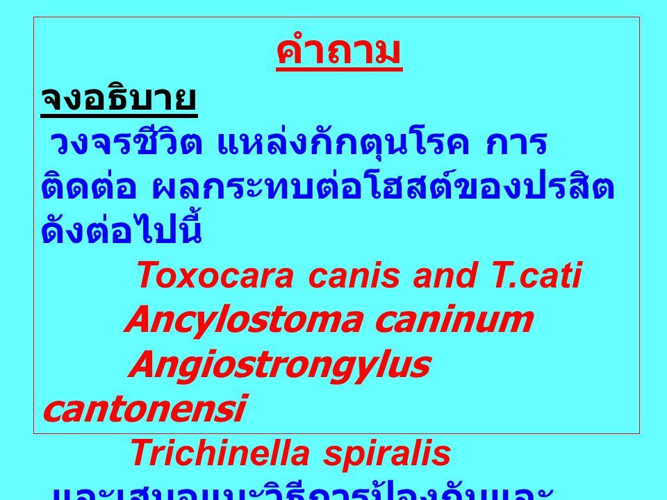 คำถาม จงอธิบาย วงจรชีวิต แหล่งกักตุนโรค การ ติดต่อ ผลกระทบต่อโฮสต์ของปรสิต ดังต่อไปนี้ Toxocara canis and T.cati Ancylostoma caninum Angiostrongylus c