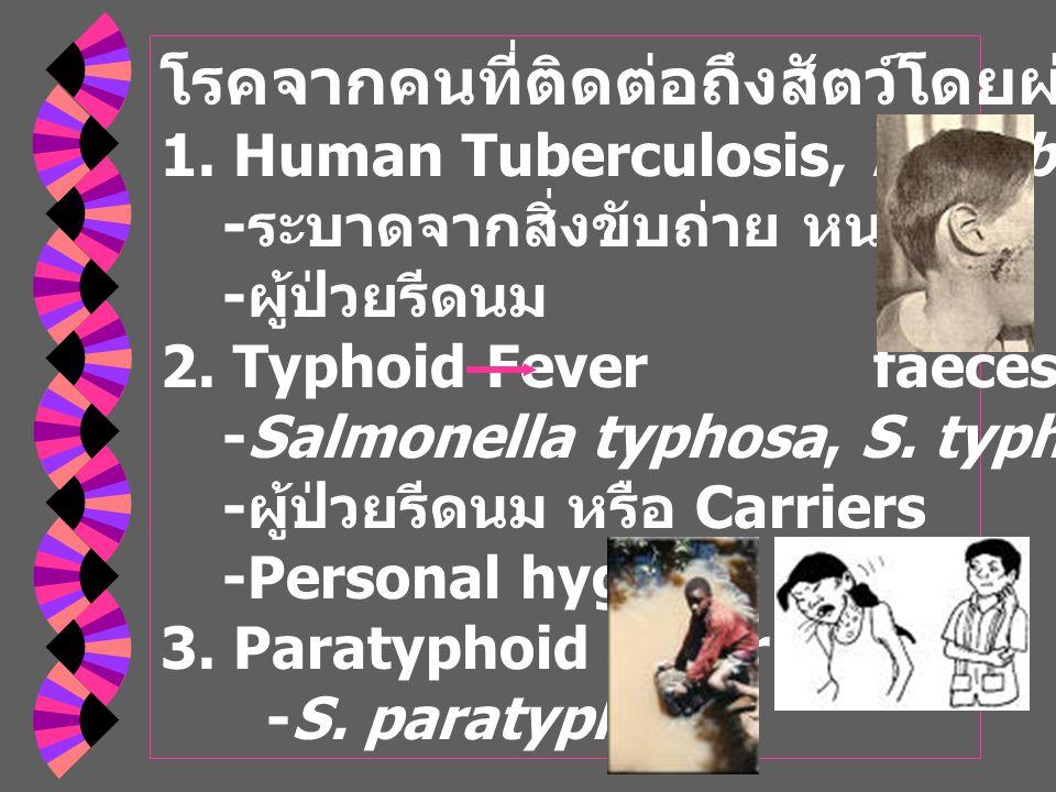 โรคจากคนที่ติดต่อถึงสัตว์โดยผ่านทางน้ำนม 1.Human Tuberculosis, M.