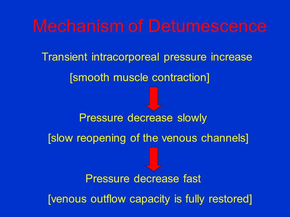 Mechanism of Detumescence Transient intracorporeal pressure increase [smooth muscle contraction] Pressure decrease slowly [slow reopening of the venou