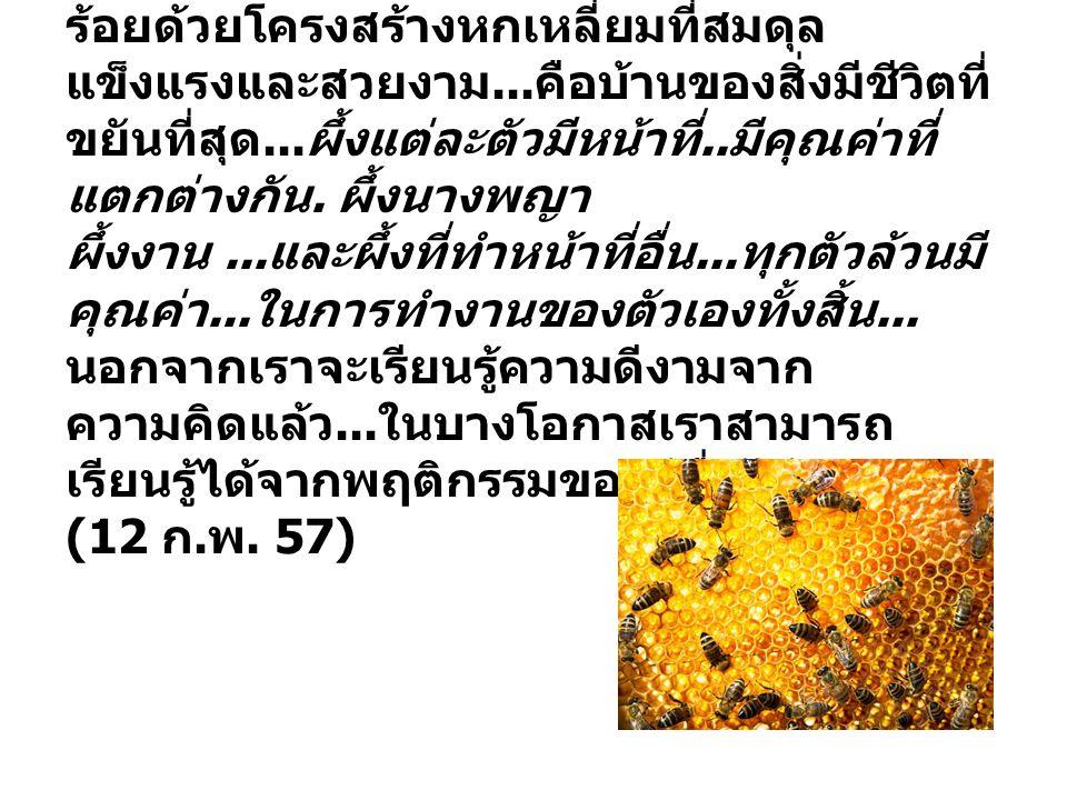รังผึ้ง... ความมหัศจรรย์แห่งธรรมชาติ... เรียง ร้อยด้วยโครงสร้างหกเหลี่ยมที่สมดุล แข็งแรงและสวยงาม... คือบ้านของสิ่งมีชีวิตที่ ขยันที่สุด... ผึ้งแต่ละต