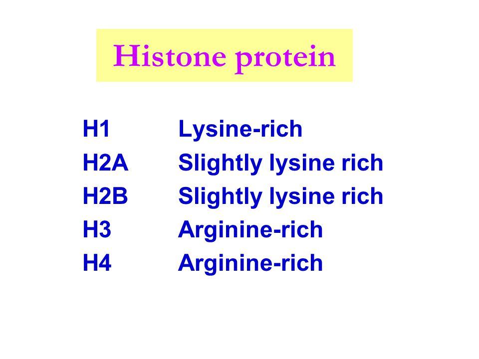Histone protein H1Lysine-rich H2ASlightly lysine rich H2BSlightly lysine rich H3Arginine-rich H4Arginine-rich