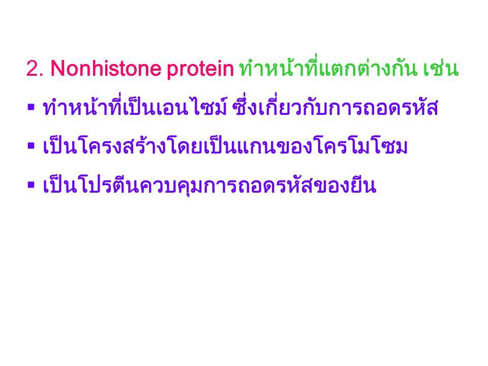 2. Nonhistone protein ทำหน้าที่แตกต่างกัน เช่น  ทำหน้าที่เป็นเอนไซม์ ซึ่งเกี่ยวกับการถอดรหัส  เป็นโครงสร้างโดยเป็นแกนของโครโมโซม  เป็นโปรตีนควบคุมก
