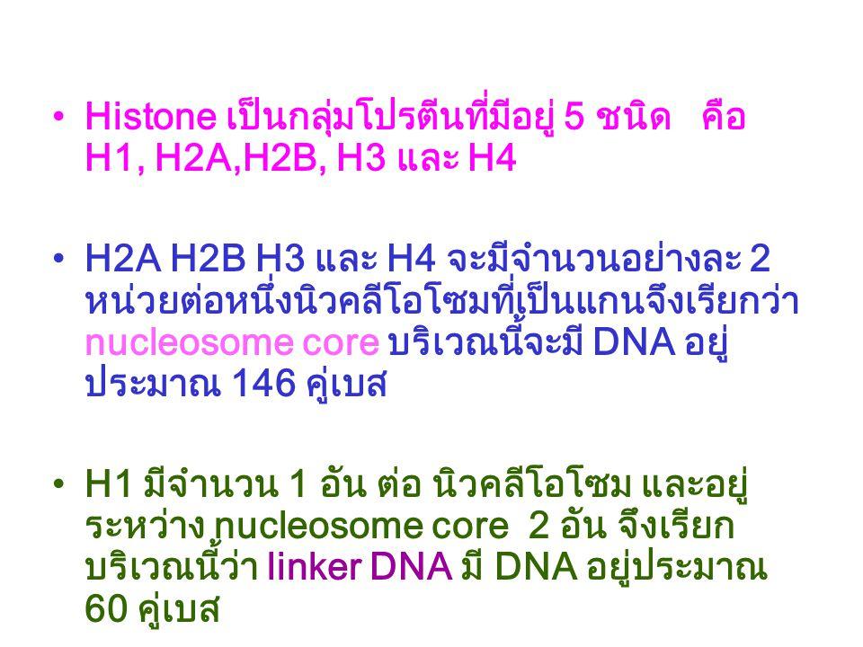http://home.wxs.nl/~gkorthof/images/chromosome_structure.jpg Chromosome structure