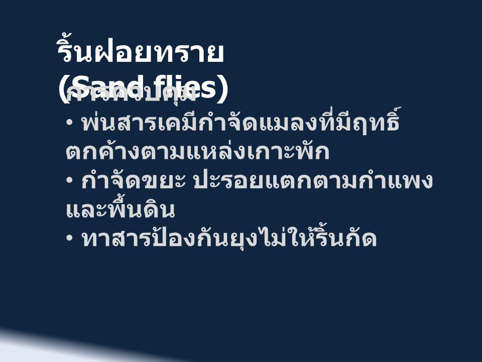 ริ้นฝอยทราย (Sand flies) การควบคุม • พ่นสารเคมีกำจัดแมลงที่มีฤทธิ์ ตกค้างตามแหล่งเกาะพัก • กำจัดขยะ ปะรอยแตกตามกำแพง และพื้นดิน • ทาสารป้องกันยุงไม่ให
