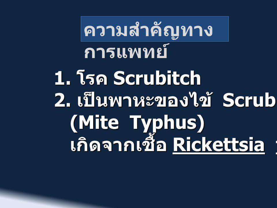 ความสำคัญทาง การแพทย์ 1. โรค Scrubitch 2. เป็นพาหะของไข้ Scrub typhus (Mite Typhus) (Mite Typhus) เกิดจากเชื้อ Rickettsia tsutsugamushi เกิดจากเชื้อ R