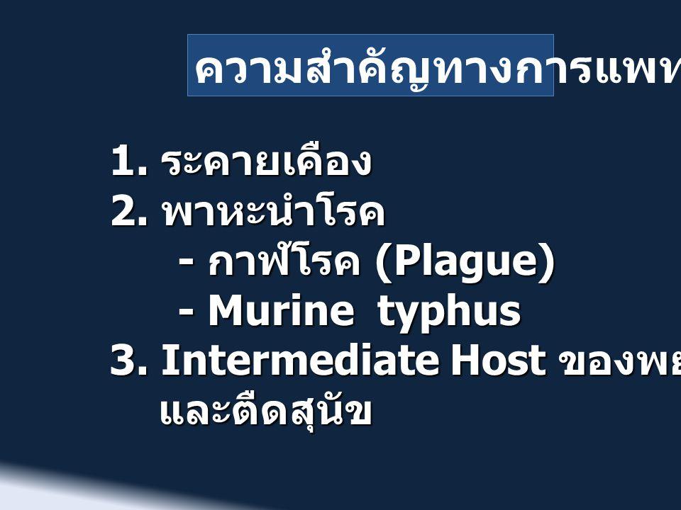 ความสำคัญทางการแพทย์ 1. ระคายเคือง 2. พาหะนำโรค - กาฬโรค (Plague) - Murine typhus 3. Intermediate Host ของพยาธิตืดหนู และตืดสุนัข และตืดสุนัข