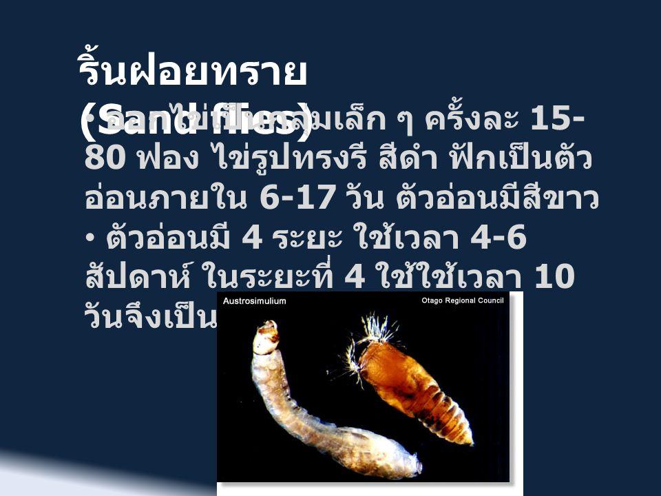 ริ้นฝอยทราย (Sand flies) เป็นพาหะนำโรค ได้แก่ • Leishmaniasis ที่เกิดจาดโปรโตซัว พบในอเมริกากลาง อเมริกาใต้ ยุโรป ใต้ แอฟริกา ตะวันออกกลางและ เอเชีย จำนวนผู้ป่วย 12 ล้านคน มี คนไข้ใหม่มากกว่า 400,000 คนต่อปี