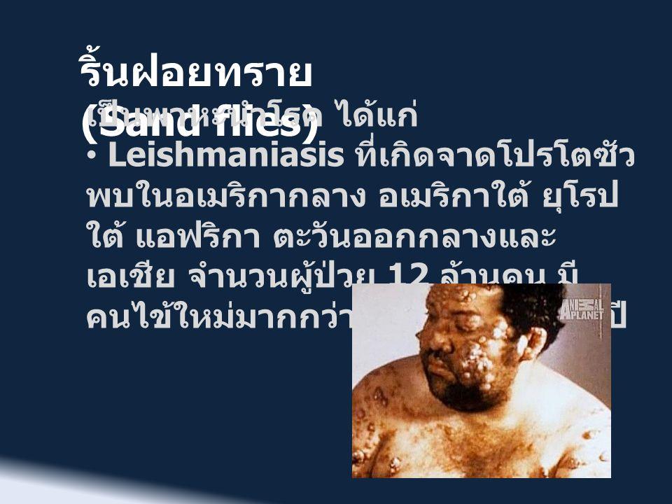 ริ้นฝอยทราย (Sand flies) แบ่งได้ 3 ชนิด คือ • ชนิดที่ไม่รุนแรง จะมีอาการที่ผิวหนัง มีตุ่ม เล็กๆ ที่ผิวและแตกออกเป็นแผล อาจมีกว่า 100 แผลก็ได้ • ชนิดรุนแรงที่ทำให้ติดเชื้อที่อวัยวะภายใน (Visceral Leishmaniasis) มีชื่อเรียกว่า โรคคาลา อาซา (Kala azar) ผู้ป่วยจะมี อาการไข้เรื้อรัง ซีด น้ำหนักลด ม้ามและตับ โต หมดเรี่ยวแรง • ชนิดที่เกิดขึ้นกับเยื่อเมือก (Mucocutaneous Leishmaniasis) ซึ่งจะ มีลักษณะคล้ายกับที่เกิดขึ้นที่ผิวหนัง แต่จะ เกิดแผลลุกลามในอวัยวะที่มีเยื่อเมือก เช่น จมูก ปาก เป็นต้น