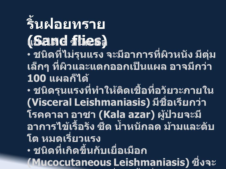 ริ้นฝอยทราย (Sand flies) • Sand fly fever เป็นไข้ระยะสั้น จาก เชื้อไวรัส พบในบริเวณเมดิเตอร์เร เนียน จีนตอนใต้ อินเดีย ศรีลังกา เอเชียกลาง • Bartonellosis เป็นโรคจากเชื้อ แบคทีเรีย Bartonella bacilliformis พบบริเวณภูเขาในประเทศเปรู โคลัมเบีย เอกวาดอร์