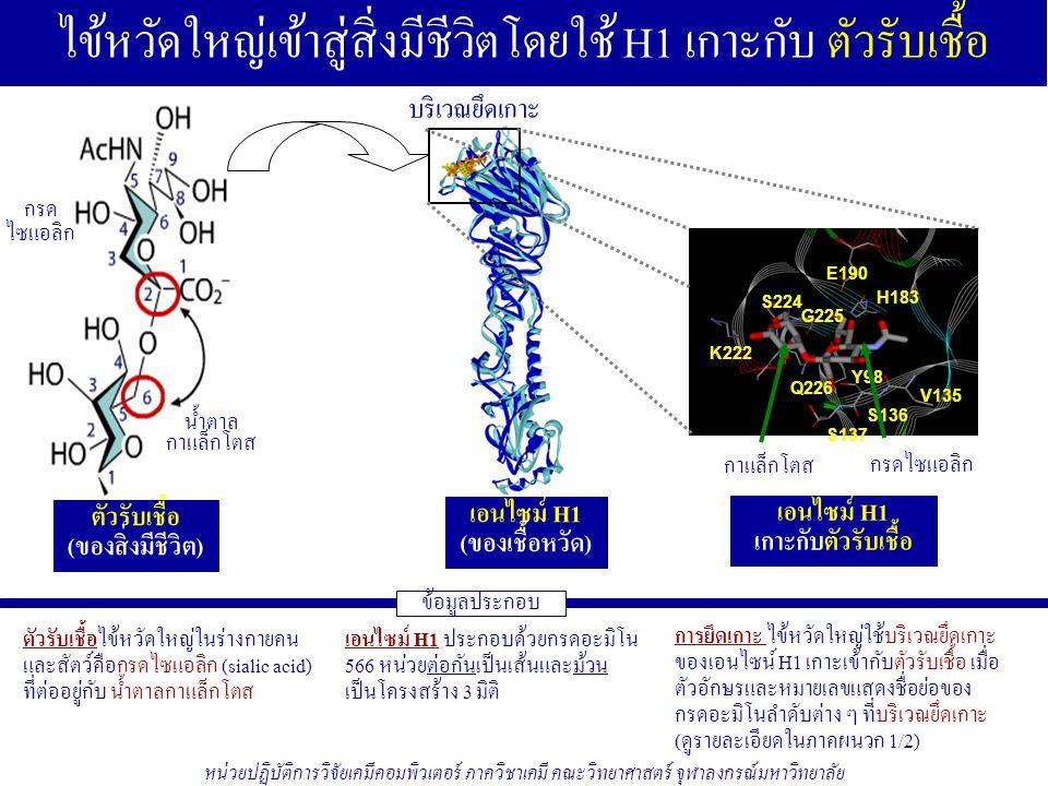 ภาคผนวก 1/5: ผลงานวิจัยไข้หวัดใหญ่สายพันธุ์ใหม่ 2009 ชนิด H1N1 1.