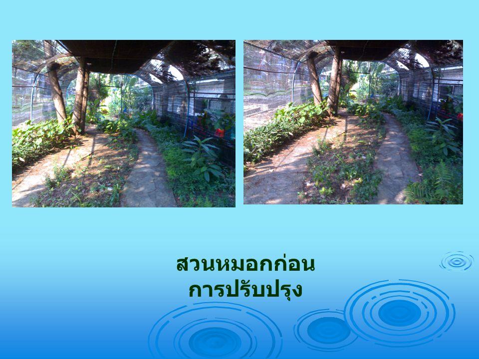 สวนหมอกก่อน การปรับปรุง