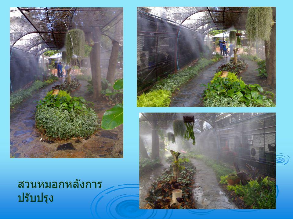 สวนหมอกหลังการ ปรับปรุง
