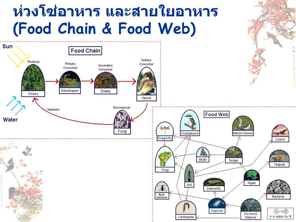 ห่วงโซ่อาหาร และสายใยอาหาร (Food Chain & Food Web)
