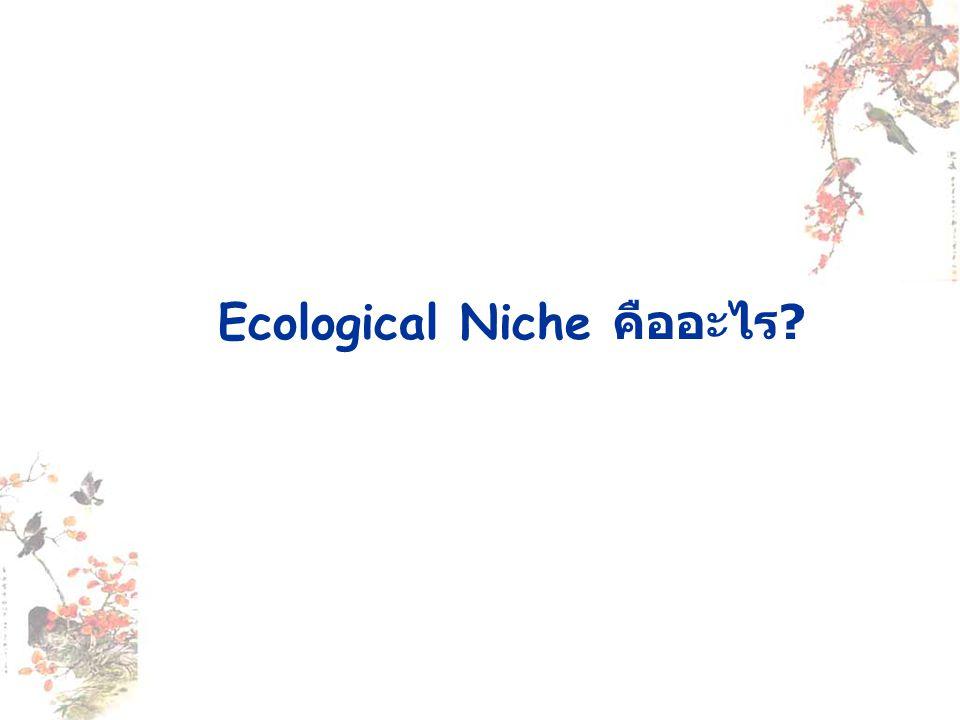Ecological Niche คืออะไร ?