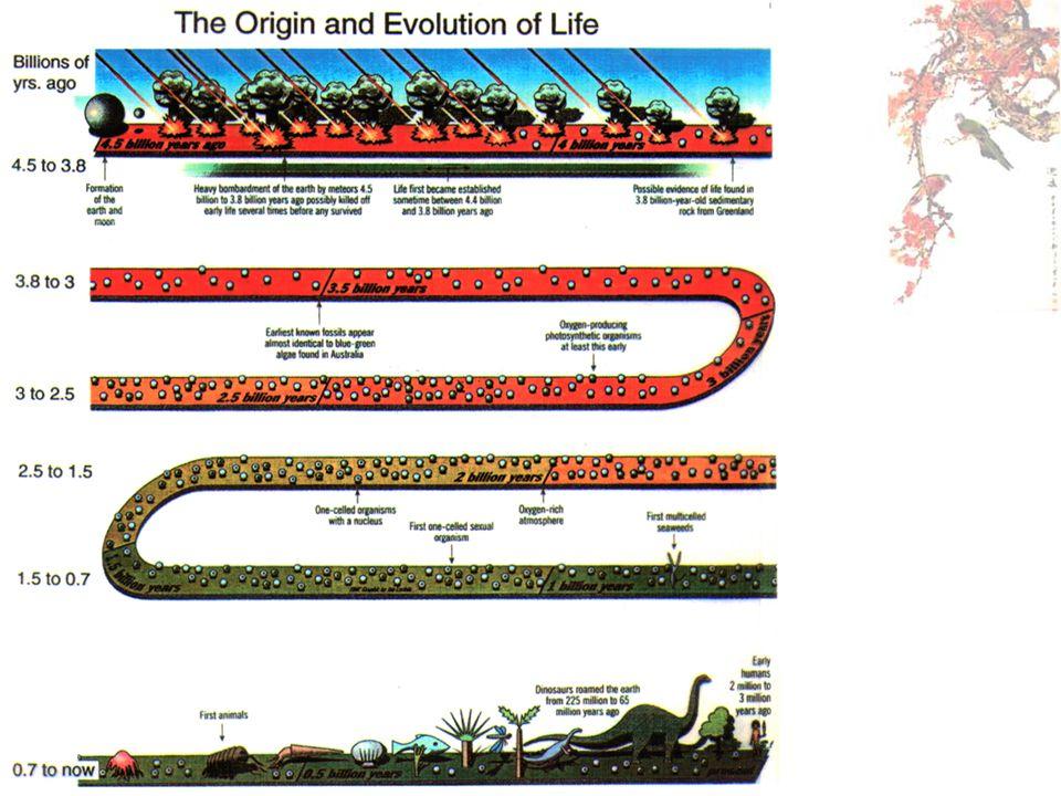 สิ่งแวดล้อมทางกายภาพและทาง ชีวภาพทำให้สิ่งมีชีวิตแต่ละชนิดมี Ecological Niche ที่แตกต่างกัน