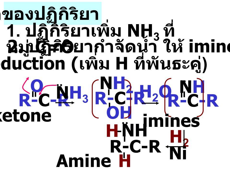 R-C-R O NH3NH3 NHNH NH H H R-C-R OH NH2NH2 - H 2 O กลไกของปฏิกิริยา 1.
