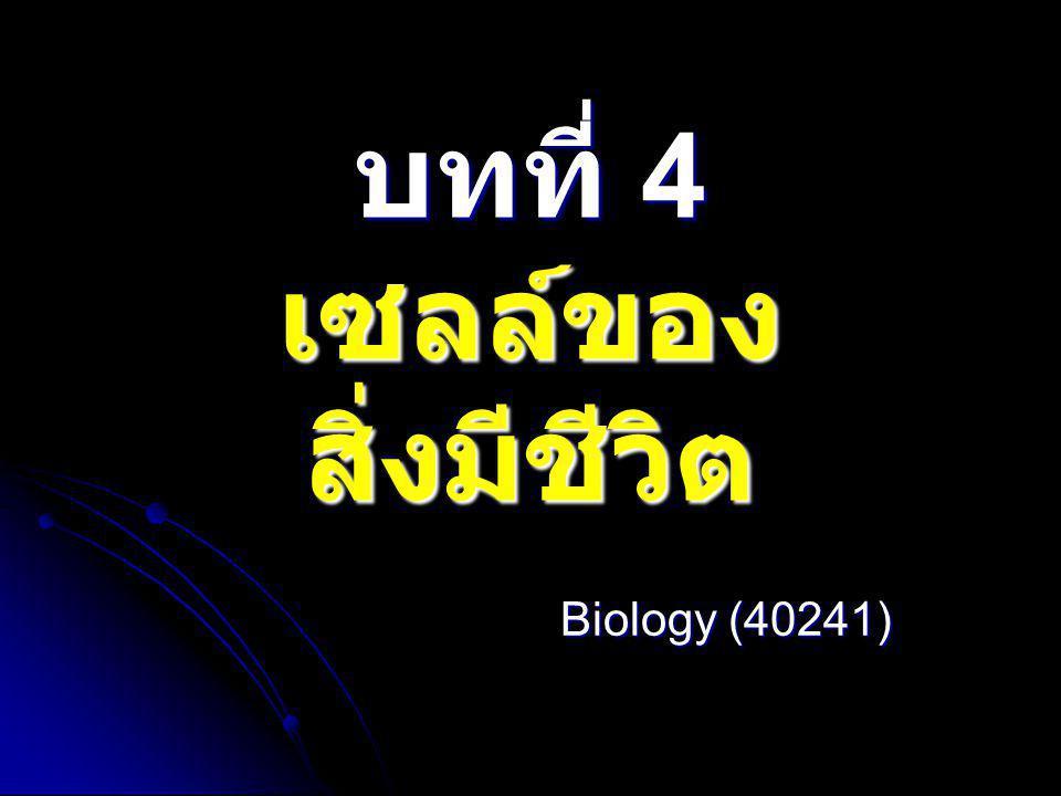 Telophase I  chromosome จะไป รวมอยู่ แต่ละขั้วของเซลล์  nuclear membrane และ nucleolus ปรากฎขึ้น  Cytoplasm เริ่มมีการ แบ่งตัว (cytokinesis)  chromosome คลายตัว และเข้าสู่ meiosis II  เมื่อสิ้นสุดระยะนี้จะได้ เซลล์ลูก 2 เซลล์ ซึ่งแต่ละ เซลล์ มีจำนวน chromosome เพียง 1 ชุด (haploid, n) http://genetika.upol.cz/cz/meioza.htm