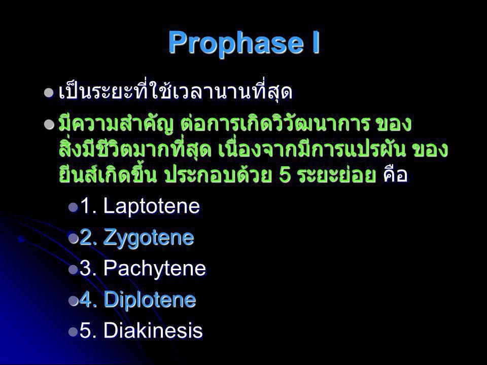 Prophase I  เป็นระยะที่ใช้เวลานานที่สุด  มีความสำคัญ ต่อการเกิดวิวัฒนาการ ของ สิ่งมีชีวิตมากที่สุด เนื่องจากมีการแปรผัน ของ ยีนส์เกิดขึ้น ประกอบด้วย