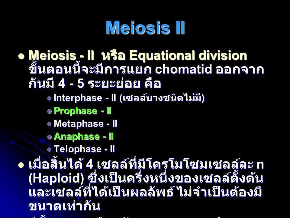  Meiosis - II หรือ Equational division ขั้นตอนนี้จะมีการแยก chomatid ออกจาก กันมี 4 - 5 ระยะย่อย คือ  Interphase - II ( เซลล์บางชนิดไม่มี )  Propha