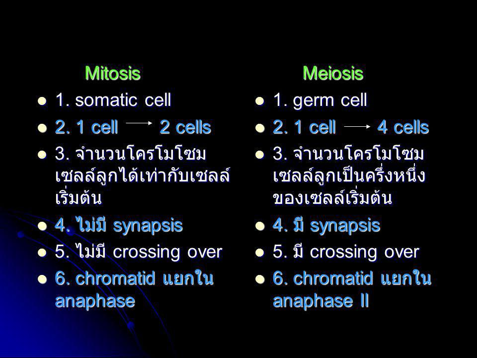 Mitosis  1. somatic cell  2. 1 cell 2 cells  3. จำนวนโครโมโซม เซลล์ลูกได้เท่ากับเซลล์ เริ่มต้น  4. ไม่มี synapsis  5. ไม่มี crossing over  6. ch