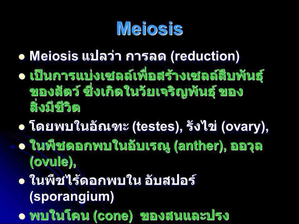 Meiosis  Meiosis แปลว่า การลด (reduction)  เป็นการแบ่งเซลล์เพื่อสร้างเซลล์สืบพันธุ์ ของสัตว์ ซึ่งเกิดในวัยเจริญพันธุ์ ของ สิ่งมีชีวิต  โดยพบในอัณฑะ