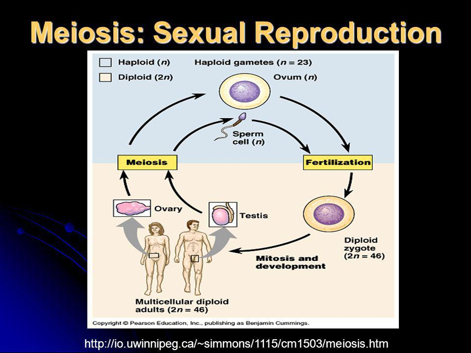 Meiosis: Sexual Reproduction http://io.uwinnipeg.ca/~simmons/1115/cm1503/meiosis.htm